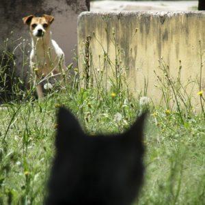 Chiens dangereux et chats errants